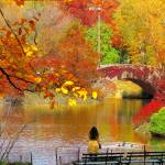 """Autumn Paradise, NYC Central Park"" by biriart"