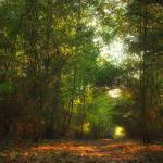 """Forest Pathway - In the Shadows"" by InspiraImage"