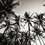 """Palms"" by SkipNall"