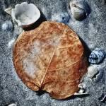 """""""Leaf 6"""" by SkipNall"""