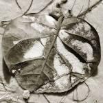 """""""Leaf 2"""" by SkipNall"""
