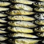 """""""Fish"""" by SkipNall"""
