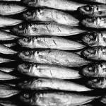 """""""Fish 2"""" by SkipNall"""