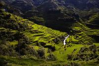 Banaue Rice Terraces 1