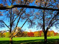 Autumn landscape, New York City