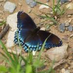 """""""Butterfly still resting"""" by campsanity"""