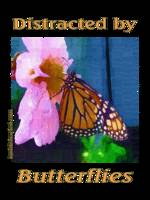 impasto-600-butterfly-dsc04142-distracted