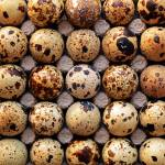 """Japanese Quail Eggs"" by LauraM"