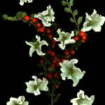 """""""Bells & Berries"""" by LindaCavaney"""