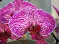 Test Orchid