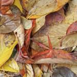 """""""Autumn Colour"""" by cofiante"""