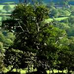 """The Tree"" by kenart"