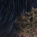"""Startrails over an olive tree"" by eduardoventura"