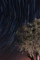 Startrails over an olive tree