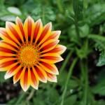 """Nantucket Flower"" by stevegarfield"