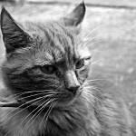 """cat"" by overgraeme"