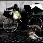 """""""Bike and dog"""" by overgraeme"""