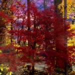 """Colorful Fall"" by ArtlbyYelena"