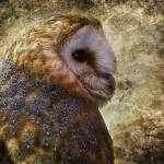 """Barn Owl 2"" by CelticOriginsPhotography"