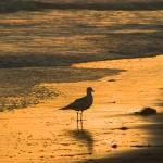 """DSCF1581a Sunset & Seagull"" by eyalna"