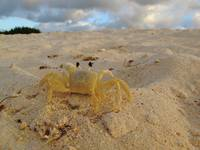 Sand Crab on the Beach