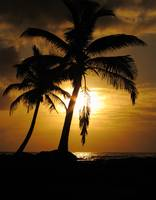 Palm Tree on a Sea Shore During Sunrise