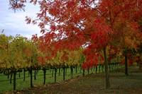 Evening Winery In Fall