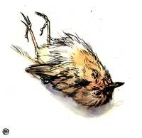 Dead Robin (graphic)