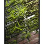 """""""Ferns On The Wall"""" by gscameraworks"""