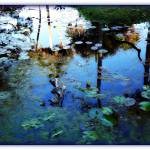 """""""Another Glowing Pond Shot"""" by ChrisCrowley"""