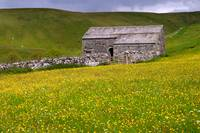 Summer meadow - Cray - The Yorkshire Dales