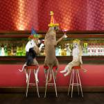 """Funny Toasting Dogs And Cats"" by johnlund"