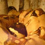 """Snake"" by cyndisstuff"