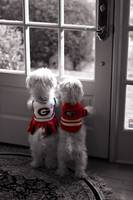 Two UGA Dawgs - University of Georgia