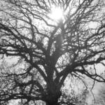 """Filtered Sun Through Tree"" by valball_100"