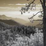 """Sequoia View - Infrared Trees Landscape"" by miir"