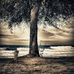 """tree+cat"" by stelios"