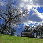 """Barn and Oak"" by jeffreysinnock"