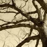 """Tree"" by lilvenom"