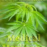 """100% Organic Medical Marijuana"" by thunder"