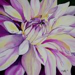 """DSC02212 purple dahlia"" by vc140"