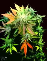 Colorful Cannabis leaves