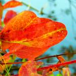 """Autumn on Water"" by angelstudio54"
