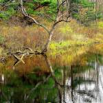 """Lone tree"