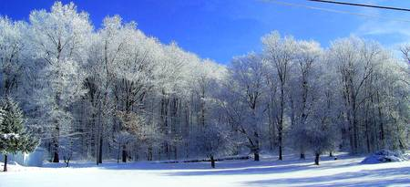Trees in a beautiful winter scene