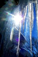 Icicles in the sun