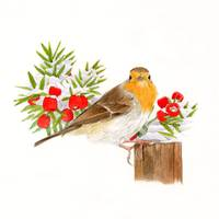 xmas robin with holly