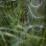 """Spiderweb"" by marieteemant"