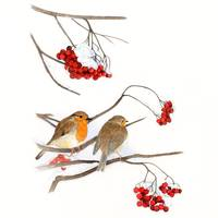 xmas robins with snow