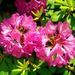 """Flowers"" by Swmr152974"